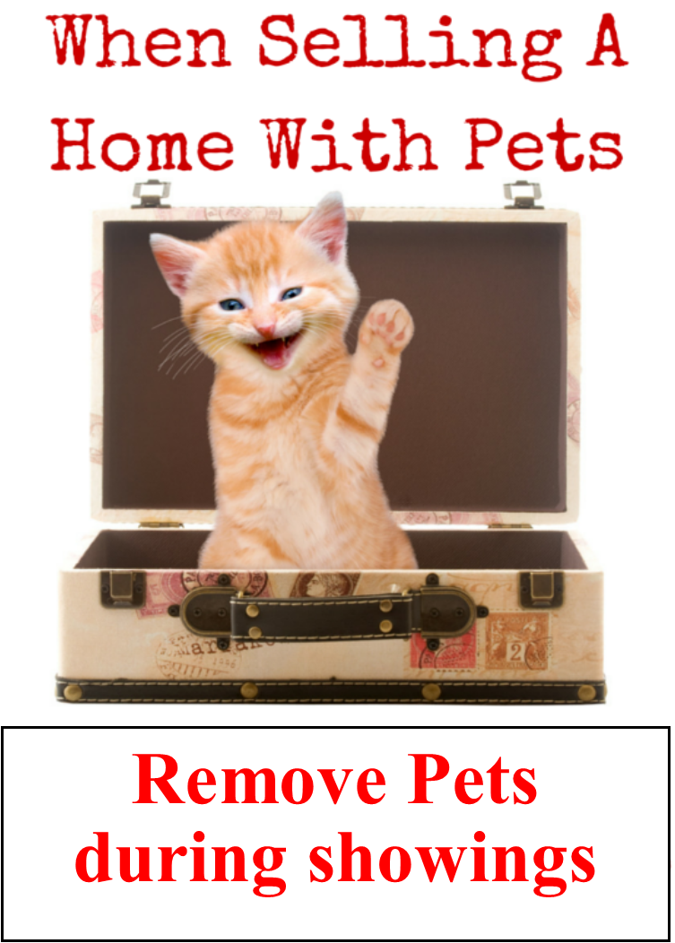 Relocating-Your-Pets-Is-A-Good-Idea