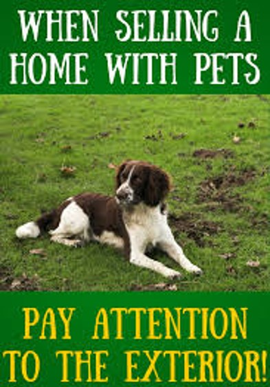 keep backyard and landscaping free of pet damage