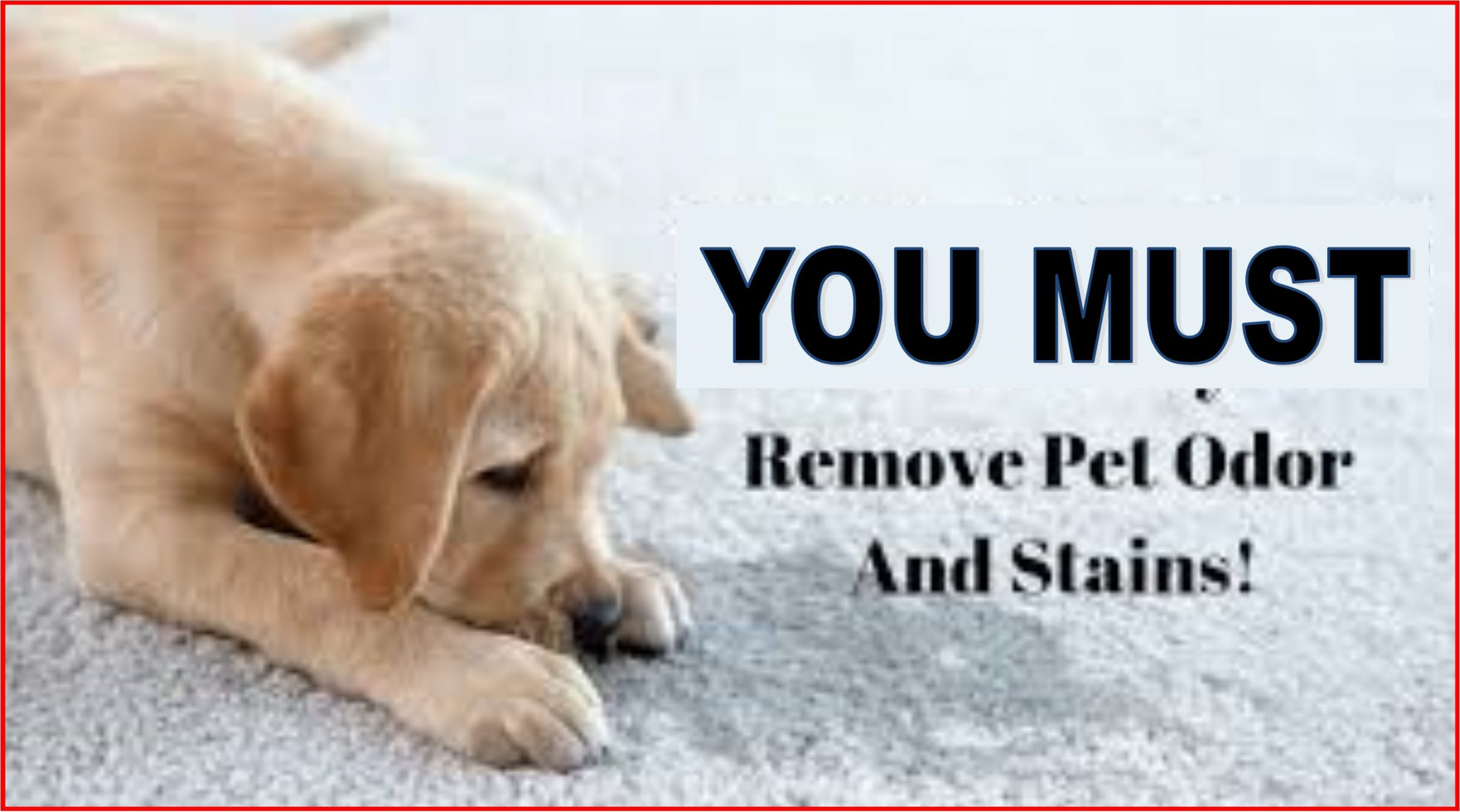 you must get rid of pet odors and stains